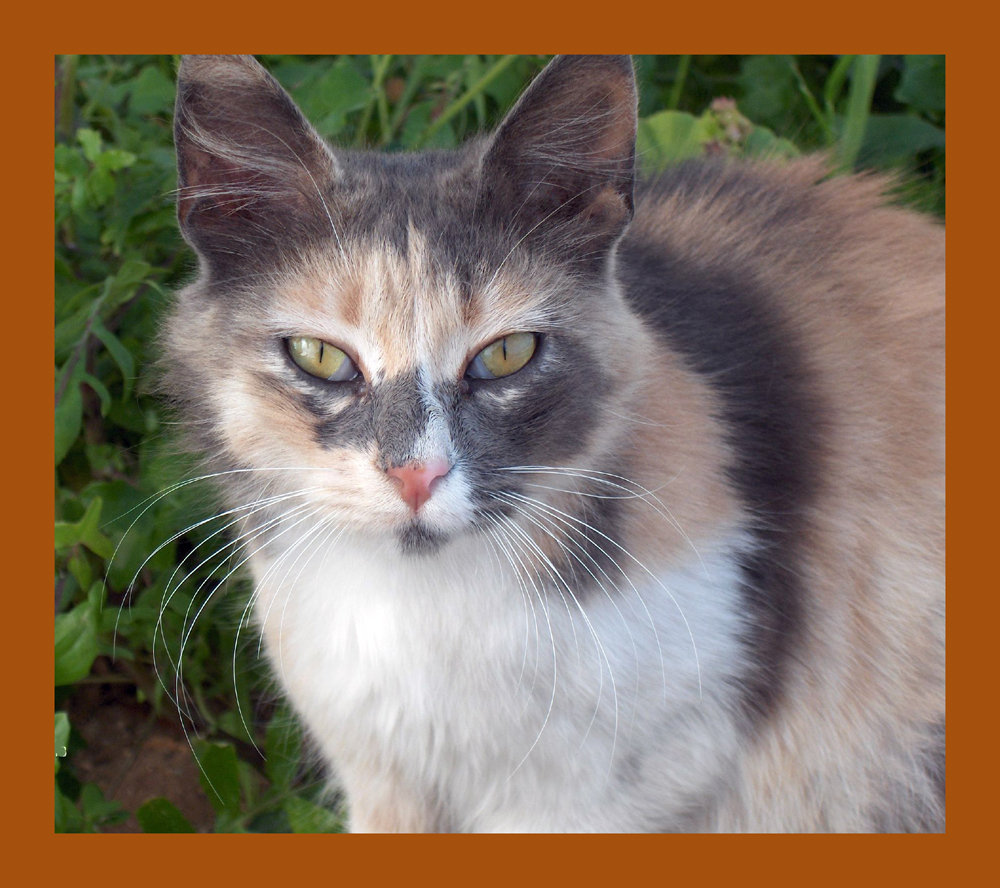 Cali, a feral mama cat to 4 kittens (now spayed!)