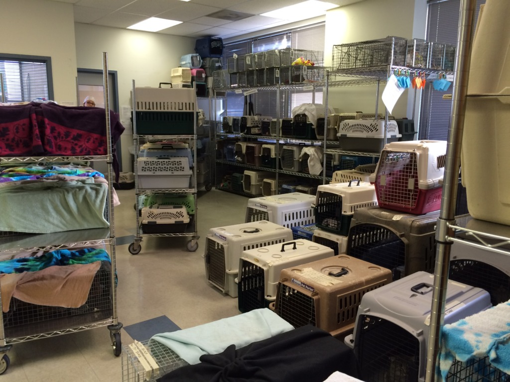 127 cats awaiting surgery on Saturday
