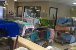 Cats in traps awaiting surgery