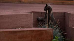 Barney's kitten checks out trap
