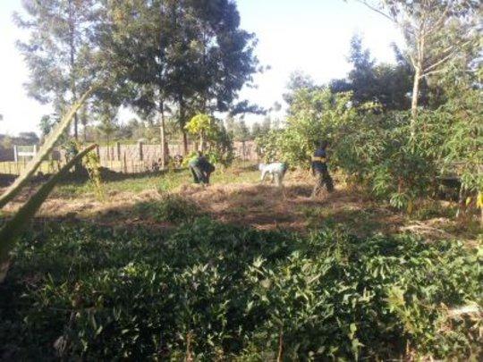 Mulching to help get through the dry season.