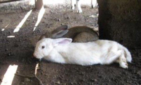 Comfy Rabbits