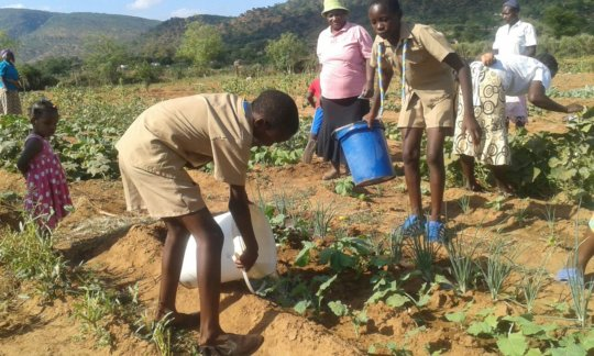 Scouts Helping Women Plant Vegetables