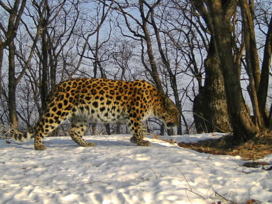 (c) Land of the Leopard