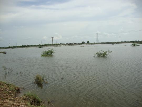 Rain water damages crops of Jati area