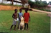 Support Uganda SPCA animal shelter ops & expansion