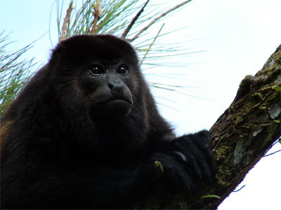Save San Luis Forest, Save This Family, Costa Rica