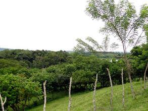 San Luis forest at ground level