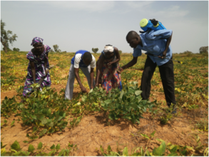 AJUBS members working in their field