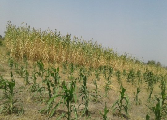 The AGAM millet farm in Moutourwa