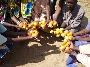 ENTERPRISE:  AJSYSGOD Tomato cultivation