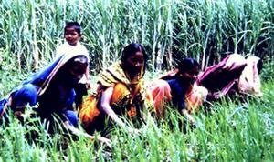 Help Secure Food for 200 Families in Bangladesh