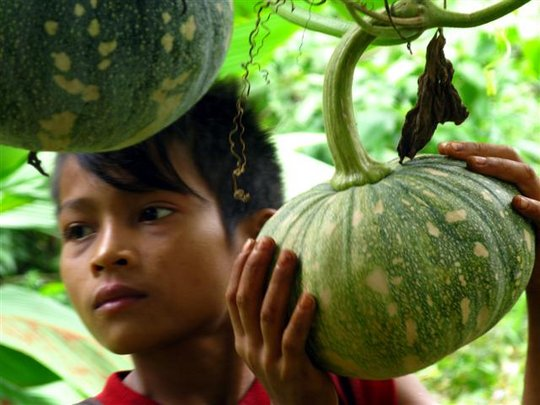 Help Ethnic Cambodians Conserve 300k ha of Forest