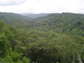 Mondulkiri project area, forest viewing
