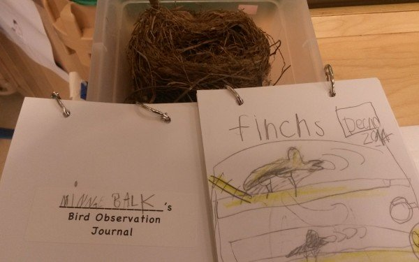 Kindergarteners Research Finches and Sparrows