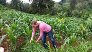 Working in the shamba