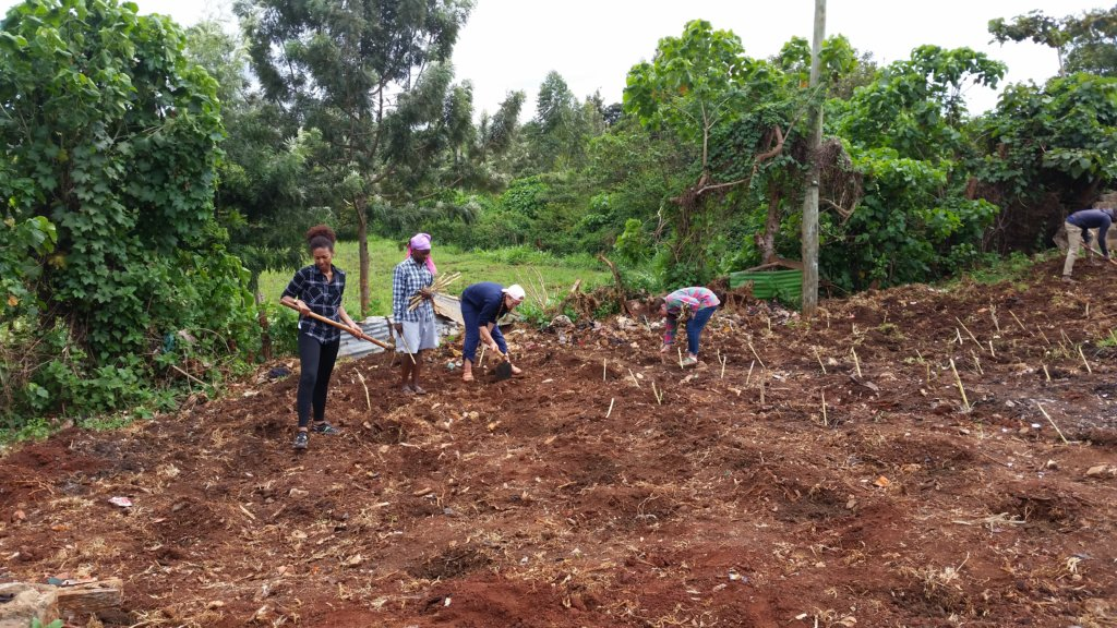 PSU students and CYEC planting napier grass