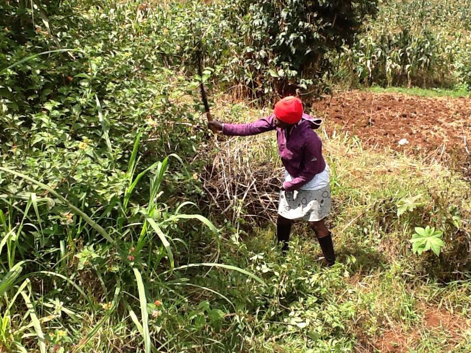 Cleaning in the shamba.