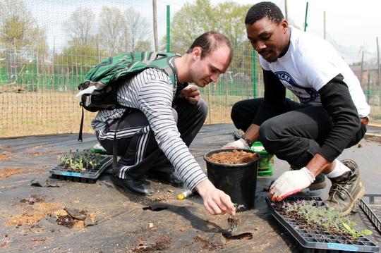 Planting kale!