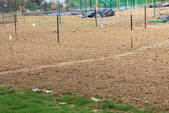 Untilled earth waiting to be cultivated.