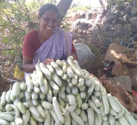 an abundant harvest