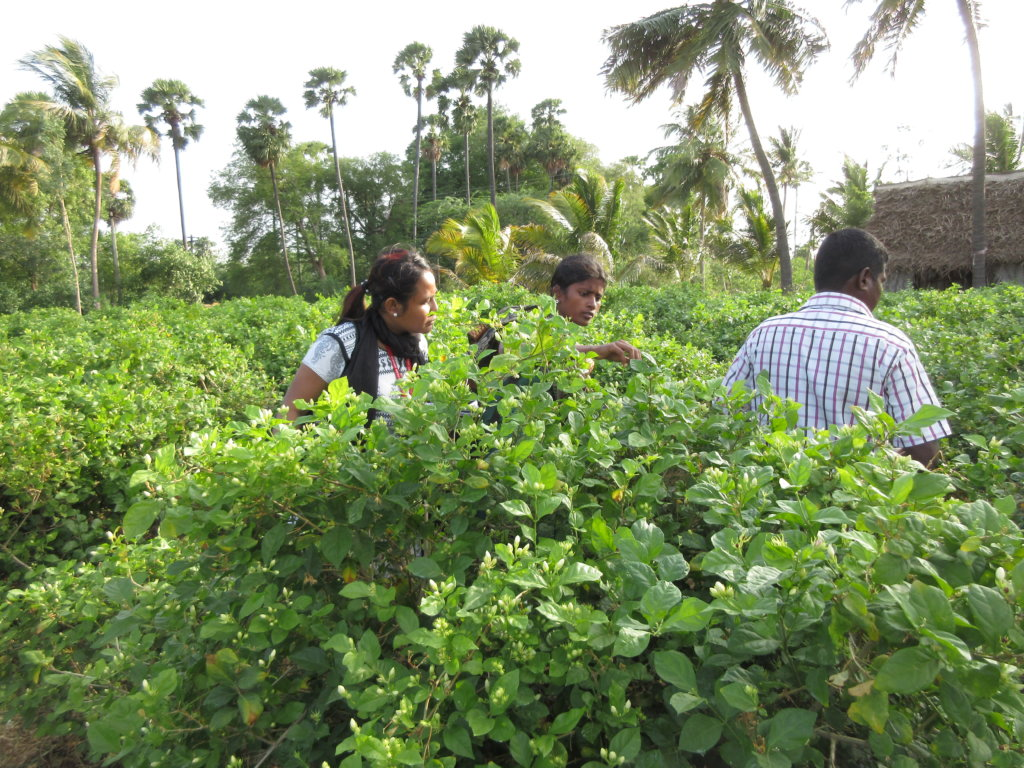 Youth getting practicals in farm field