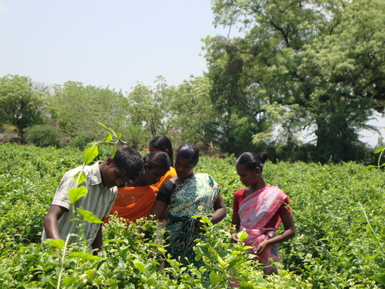 Youth getting practical training in Farm Field