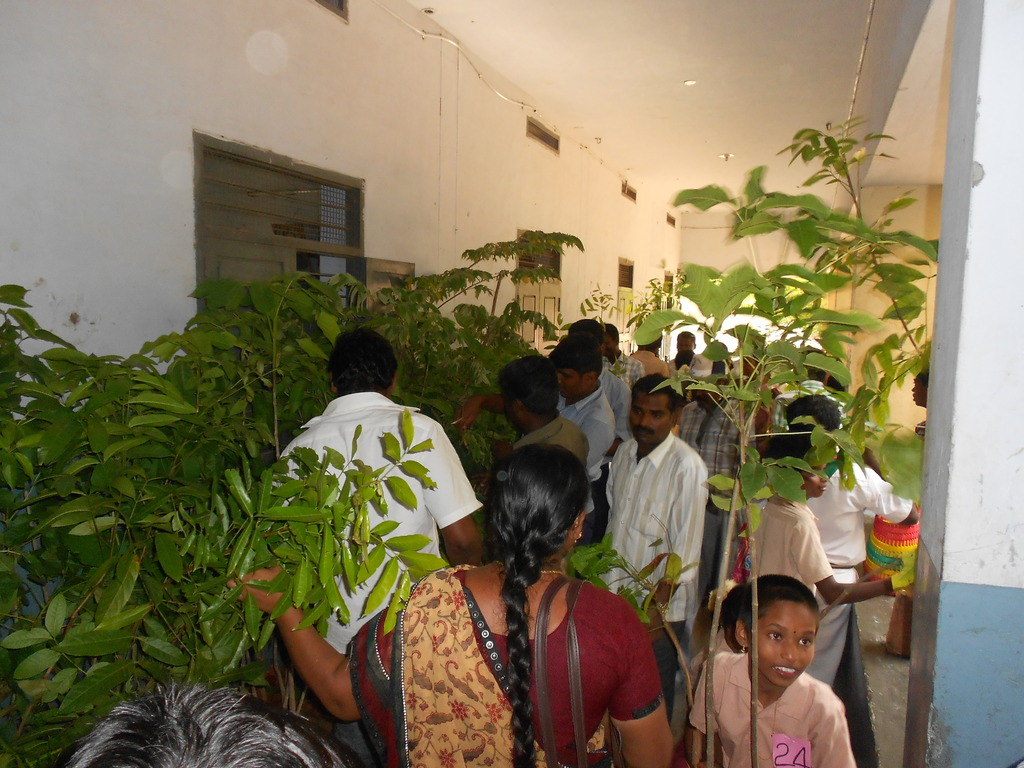 Tree plants distributed to Youth.