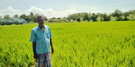 Thangavel stands among his crops.