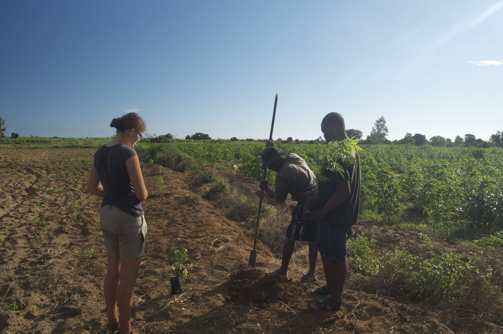 Planting New Orchards With Ranobe Farmers