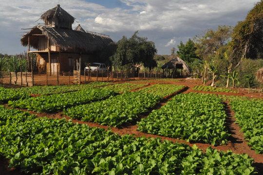 Expansion of gardens around Ho Avy Center in Ranob