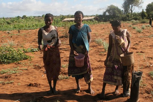 Women of Ranobe seeding their crops