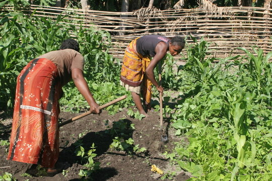 FIMPAHARA women working in a community garden