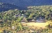Regeneration of Degraded Forest