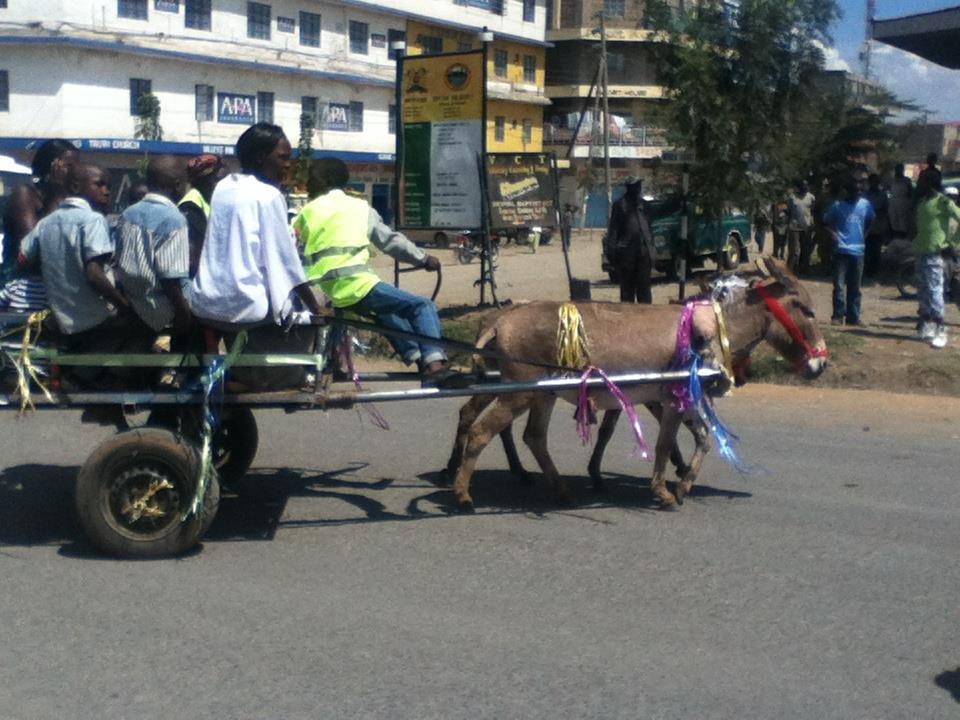 Donkey Cart Race Fundraiser