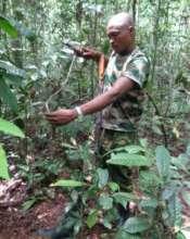 Dismantling trap in Afarama