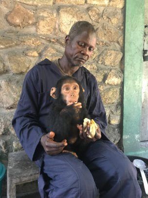 Mokonzi with female chimp infant