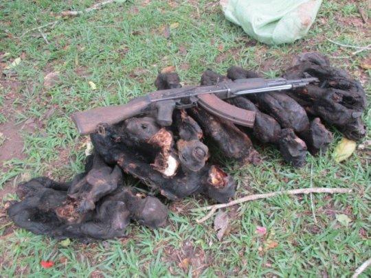 Seized Bushmeat and Firearm