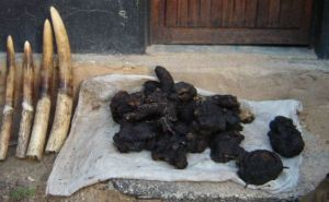 Confiscated ivory and elephant meat