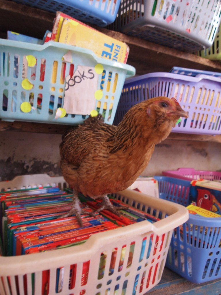 New text books in the school, and a chicken