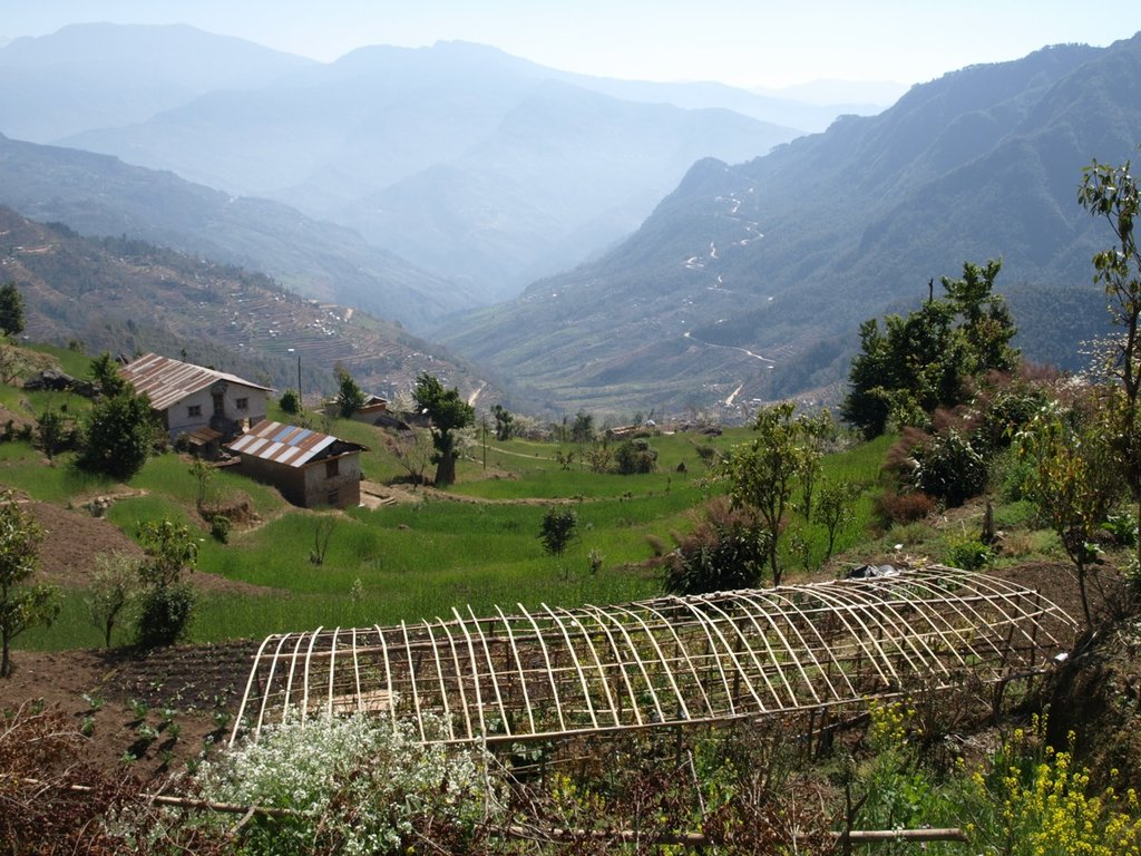 A thriving vegetable garden in Nepal