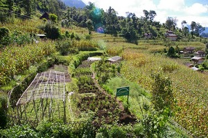 demo garden in Sundrawati VDC