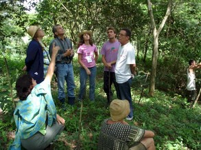 Agroforestry practice