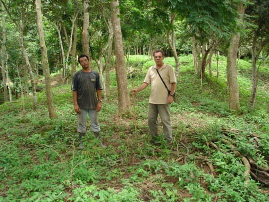 Plantation area. Roberto Lamego and helper