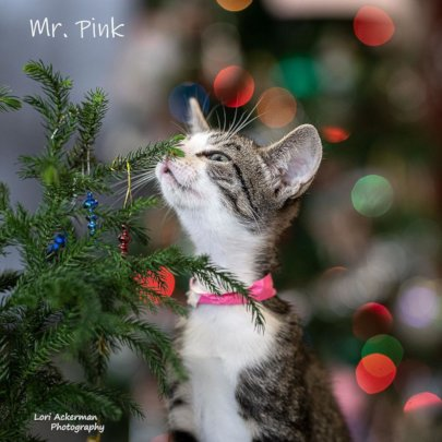 Mr. Pink wishing you a happy holiday!