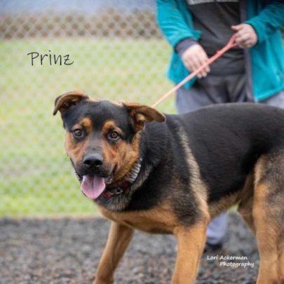 Meet Prinz