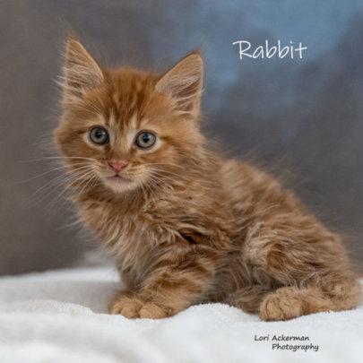 Rabbit the Kitten