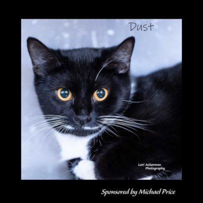Meet Dust