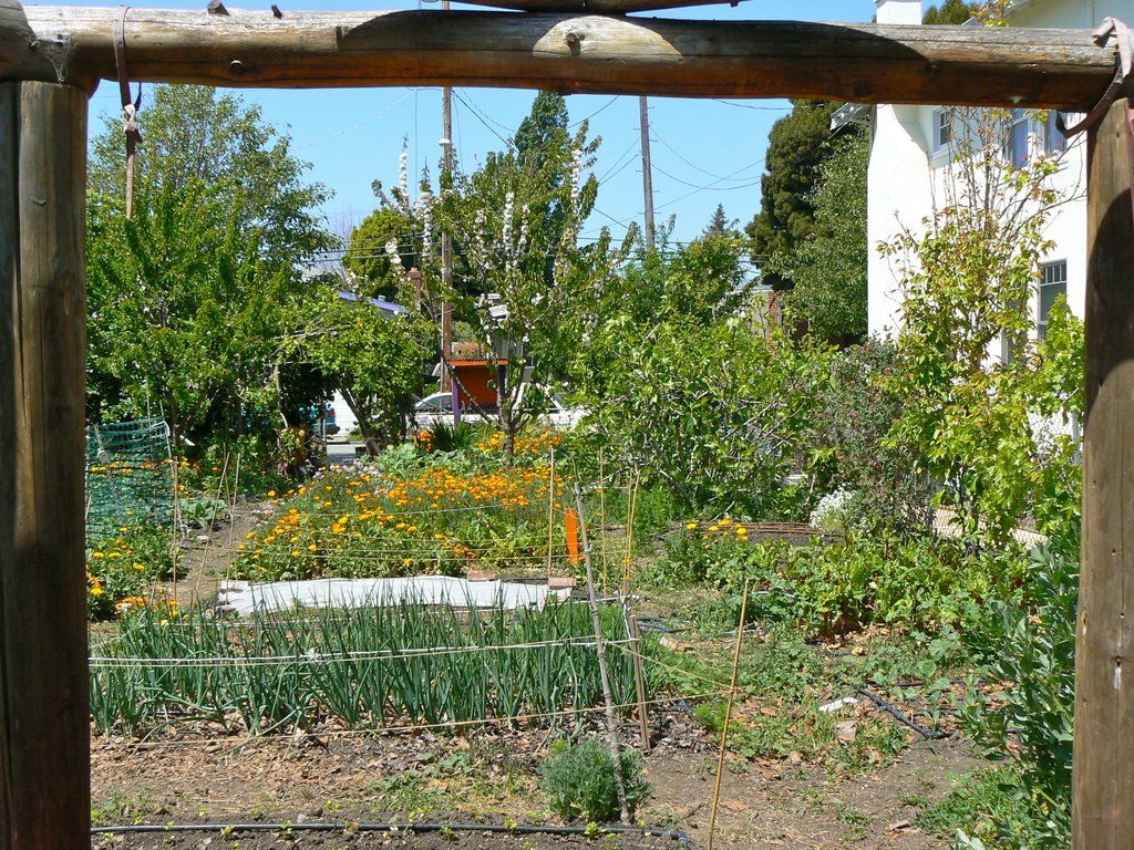 Improve Access to Healthy Food in West Oakland