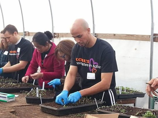 Volunteers assist with our seedling transplants